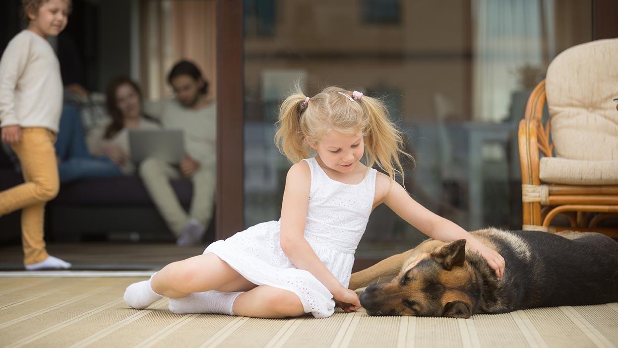 stock-terrasse-kinder-hund